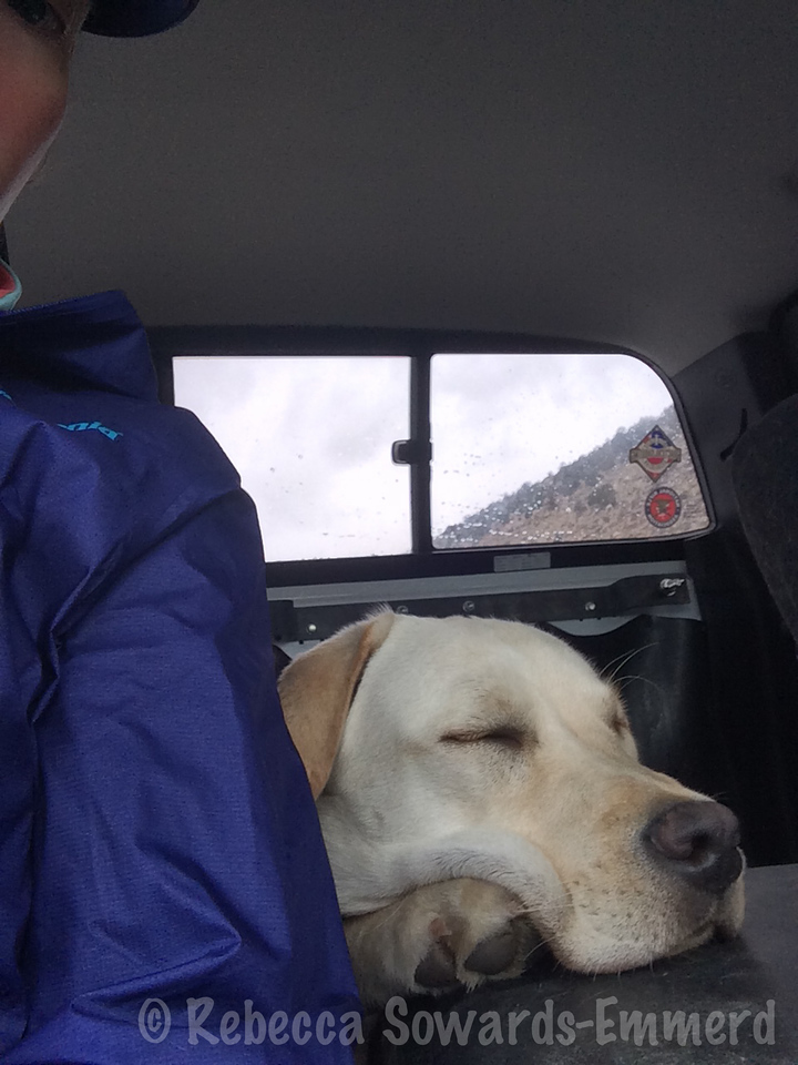 And this is Thor on the drive back to camp. Pup was exhausted!