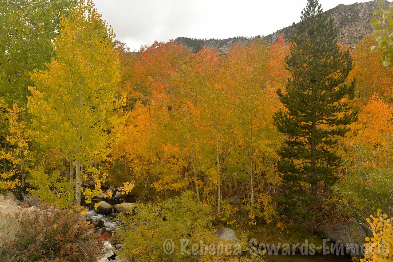 Fall colors along the road to Sabrina