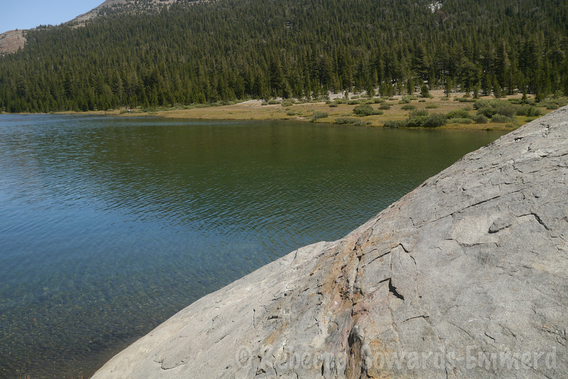 My little perch at the inlet of tioga Lake. We caught several fishies here. Mmm dinner.