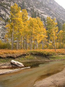 Aspens in Paradise Valley