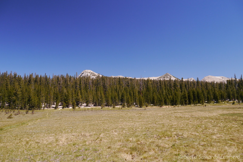 Heading across Delaney Meadow towards a nice looking dome. We'll end up climbing it later...
