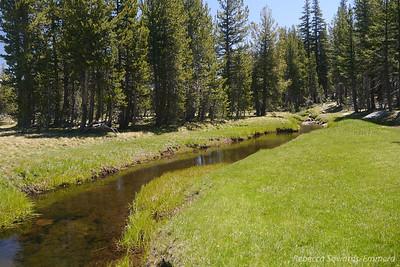 Delaney Creek. So many fishies!