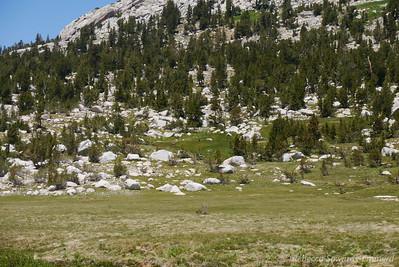 Deer across the meadow.