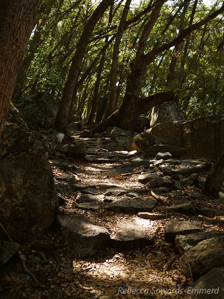 After Wapama Falls, the trail wiggles along the valley's wall, in and out of shaded forest.