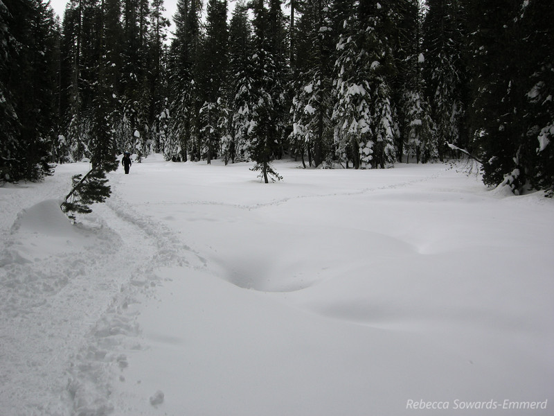 Down the well-stomped trail. It snowed a couple of days prior and it still coats the trees.