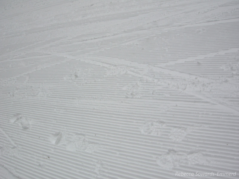Grooming and tracks - skate skis and boots.