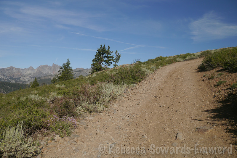 The hike to San Joaquin Mountain, at its longest, starts from Minaret Vista just above Mammoth Mountain. With a 4WD vehicle you can drive the first ~1.5 miles and cut off some time. The hike along the road is easy, though.