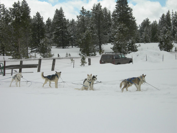Happy dogs ready to run<br /> <br /> There were some people setting up a dogsled at the trailhead.