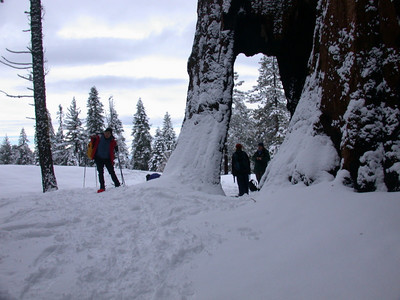 Lunch stop in a hollowed out sequoia