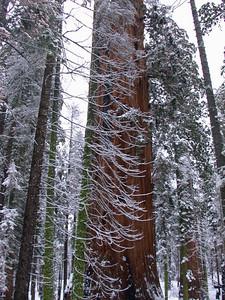 Base of the Washington Tree