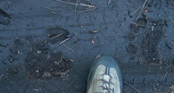 And we saw some bear tracks, but no bears. :(