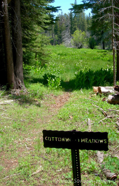 On the way in we hiked by Cottonwood meadows