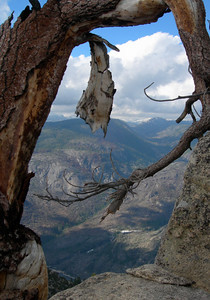 A dead tree on the Smith Peak summit  (it reminded us of the Ansel Adams Sentinel Dome tree)