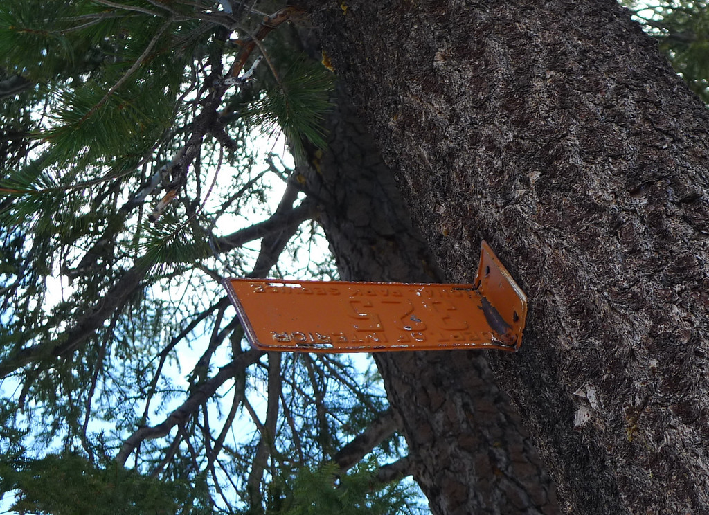 The winter trail markers in the trees were license plates (?). At the top: National Park Service. Bottom: Dept of Interior. A number in the middle. Shape and size of license plates. Strange but cool - never seen trail markers like this before.