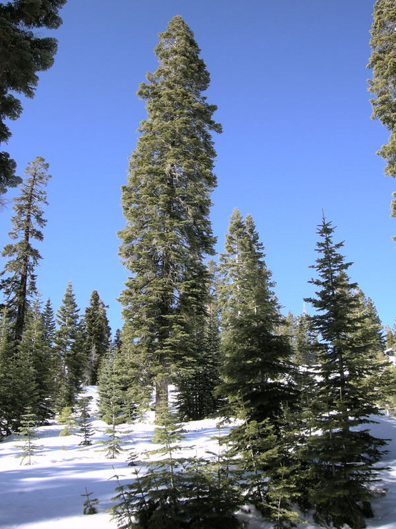 Okay, it doesn't really suck - it's a perfect sierra winter day.