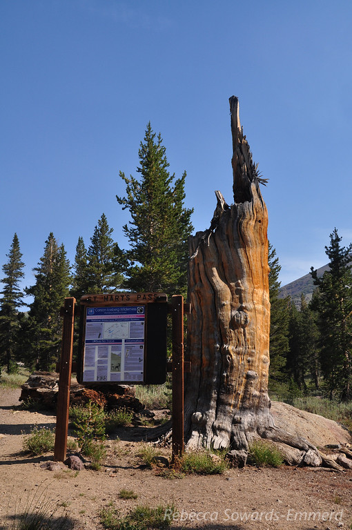 St Mary's Pass trailhead, just below Sonora Pass