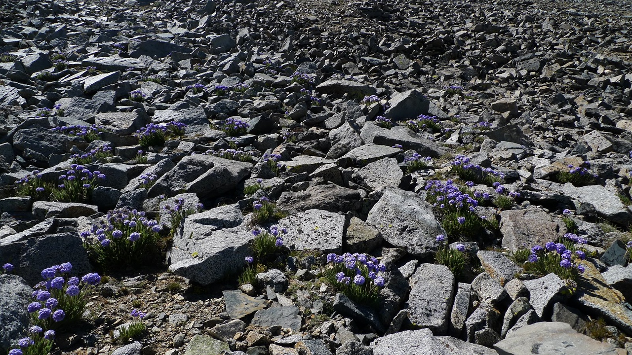 It's everywhere! I love the color among the desolate grey granite.