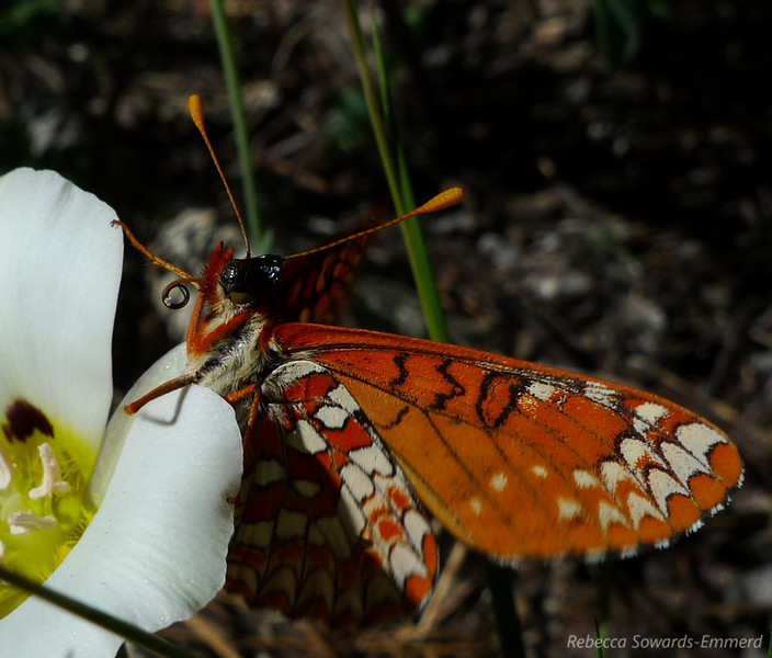 A mariposa on a mariposa