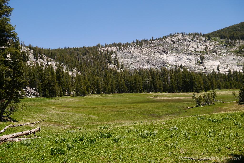 Half Moon Meadow.