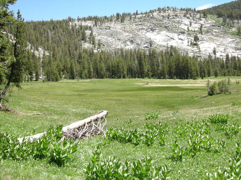 Half Moon Meadow