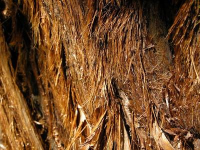 Closeup of soft bark