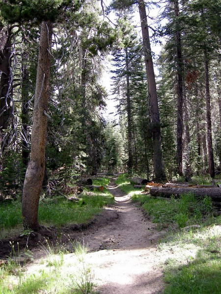 The trail starts off flat and wandering through the woods