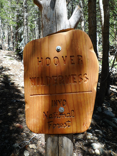 As you start up the trail you enter the Hoover Wilderness