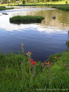 Paintbrush along the Lakeshore