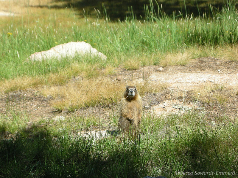 Another wildlife sighting - this time a marmot with his mouth full.