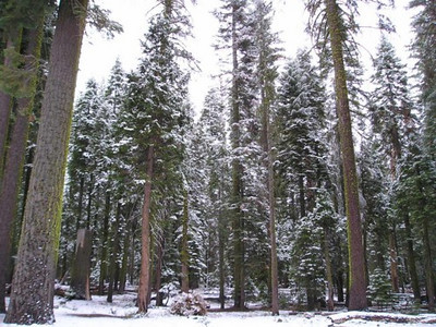 We stopped at Crane Flat for a restroom break before heading out of Yosemite. I snapped this shot of the beautiful snow-covered trees. I'm sure it will all melt quickly, but it was nice to get a taste of winter!