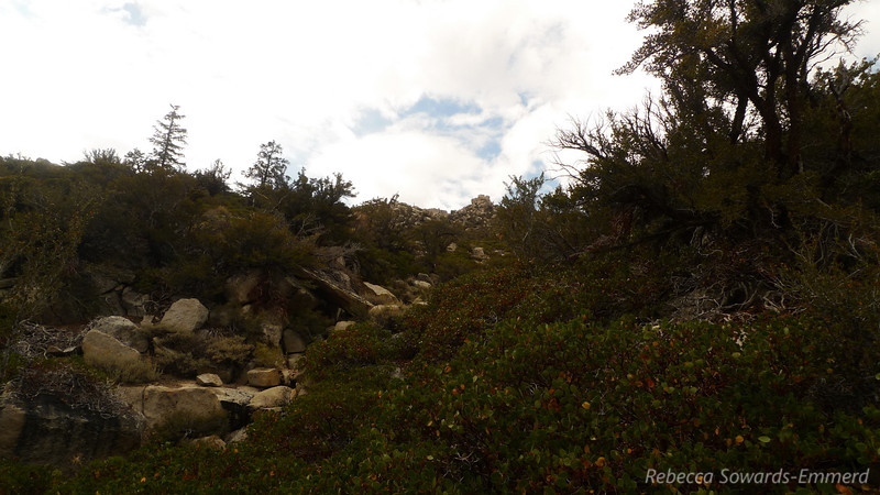 There is a bit of manzanita overgrowth but in general it's a pretty easy walk up the slope.