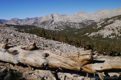 This stretch provides some fantastic views of the Kaweahs and the Great Western Divide.
