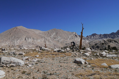 The basin is barren with little large scale biological life. Most trees are dead and gnarled.