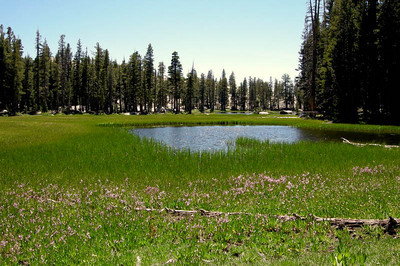 Lower Chain Lake - buggy but pretty!  The meadow lining the lake was filled with Shooting Stars