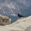 A raven checks us out, and quickly realizes we're not going to give him a cookie.