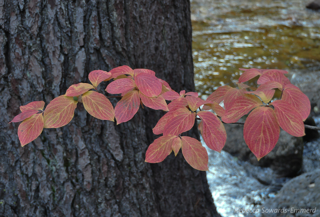 Fall Colors along the Merced