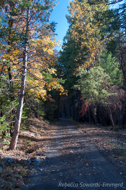 The road to Turtleback Dome