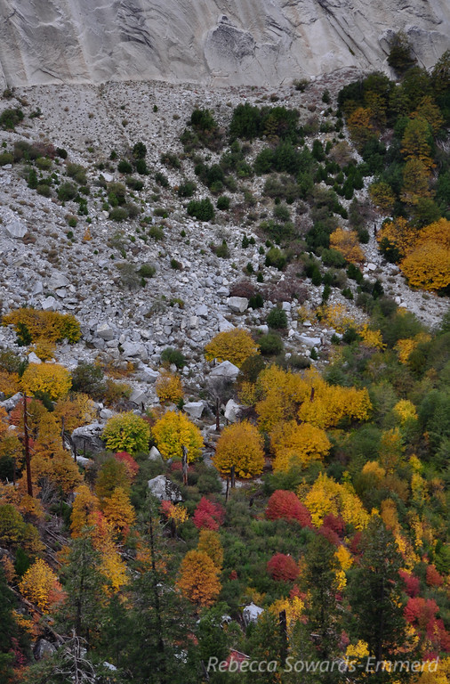 Fall colors at the foot of Glacier point (looking down from Sierra Point)