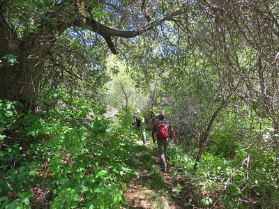 Surrounded by Poison Oak.