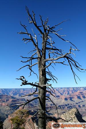 Grand Canyon Adventure 2014