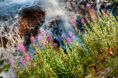 wildflower-waterfall