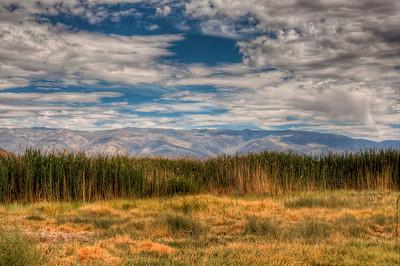 sierra-mountains-grasses