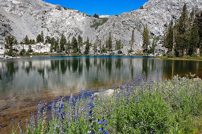 sierra-mountains-lake-flowers-2