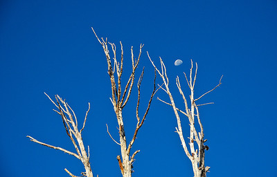 bare-branches-moon