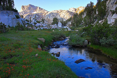 sierra-mountains-creek-wildflowers-2