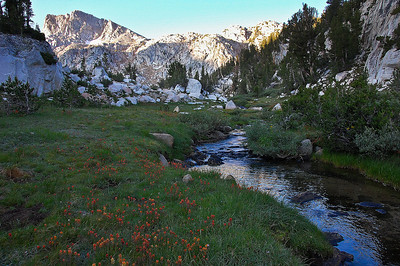 sierra-mountains-creek-wildflowers