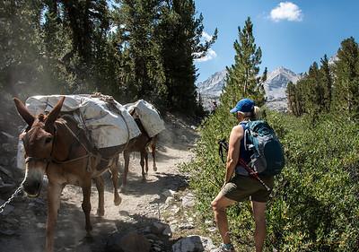 mountain-trail-horses-4