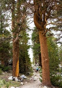 mountain-trail-hiker-3-33