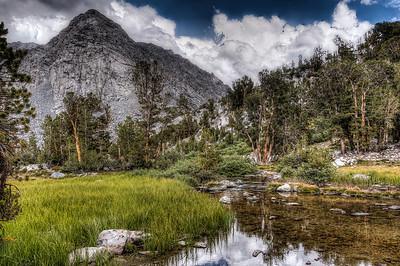 mountain-creek-trees-23