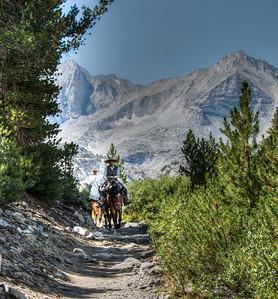mountain-trail-horses-3